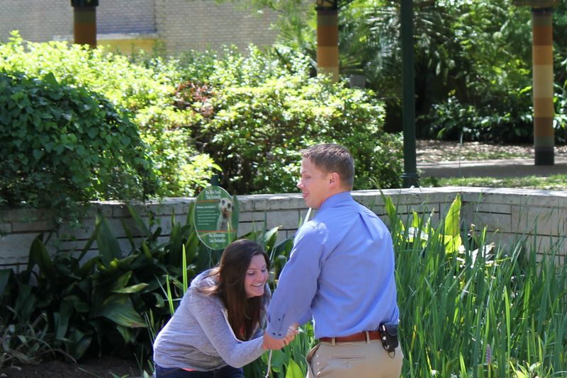 Image 4 of Cute Marriage Proposal at the Zoo