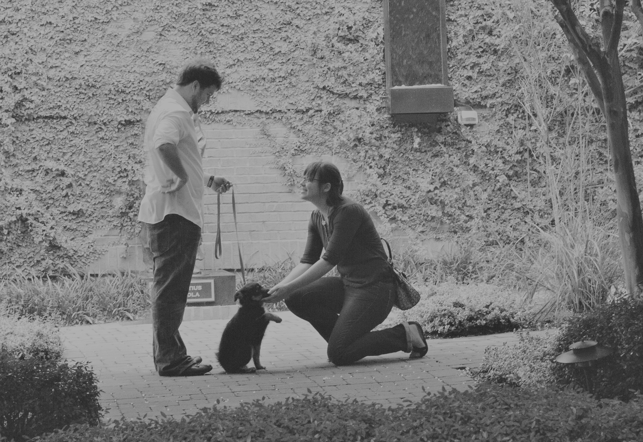 Image 7 of The Cutest Puppy Proposal of All Time