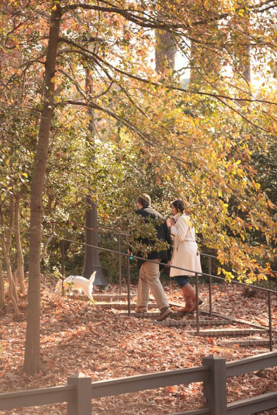 beautiful proposal in the park 47_low