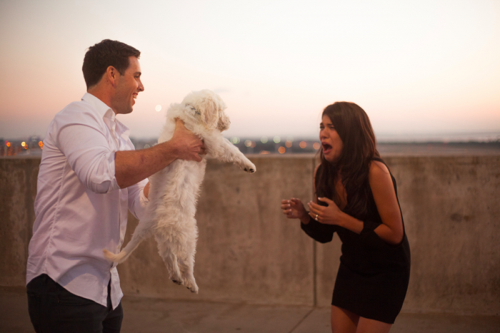 Image 17 of 20 Cute Marriage Proposal Ideas with Dogs