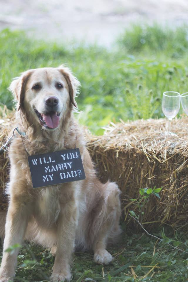 Image 7 of 20 Cute Marriage Proposal Ideas with Dogs