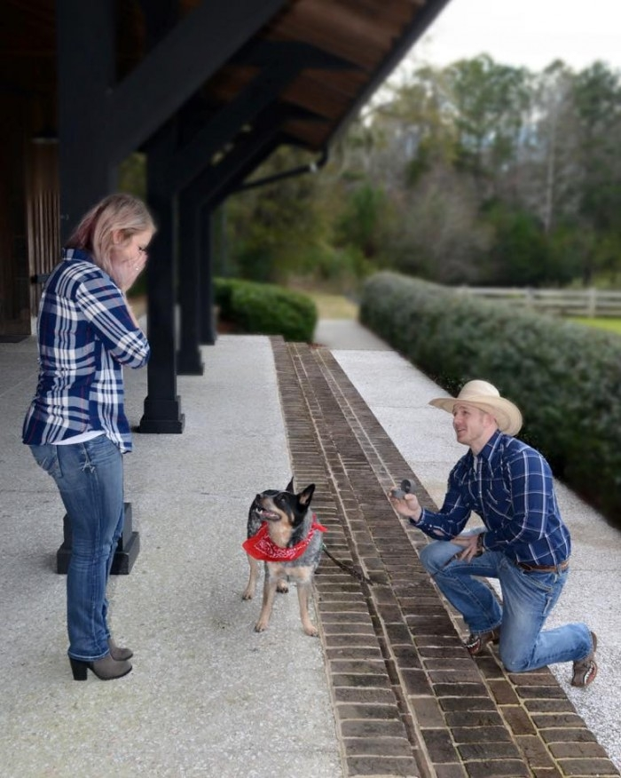 Image 16 of 20 Cute Marriage Proposal Ideas with Dogs