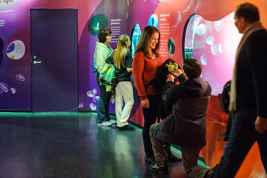 aquarium marriage proposal_06_low