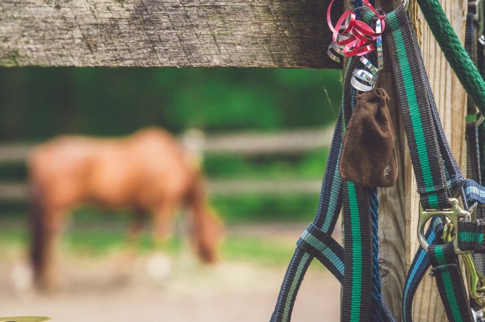 Equestrian Horse Stable Proposal (2)