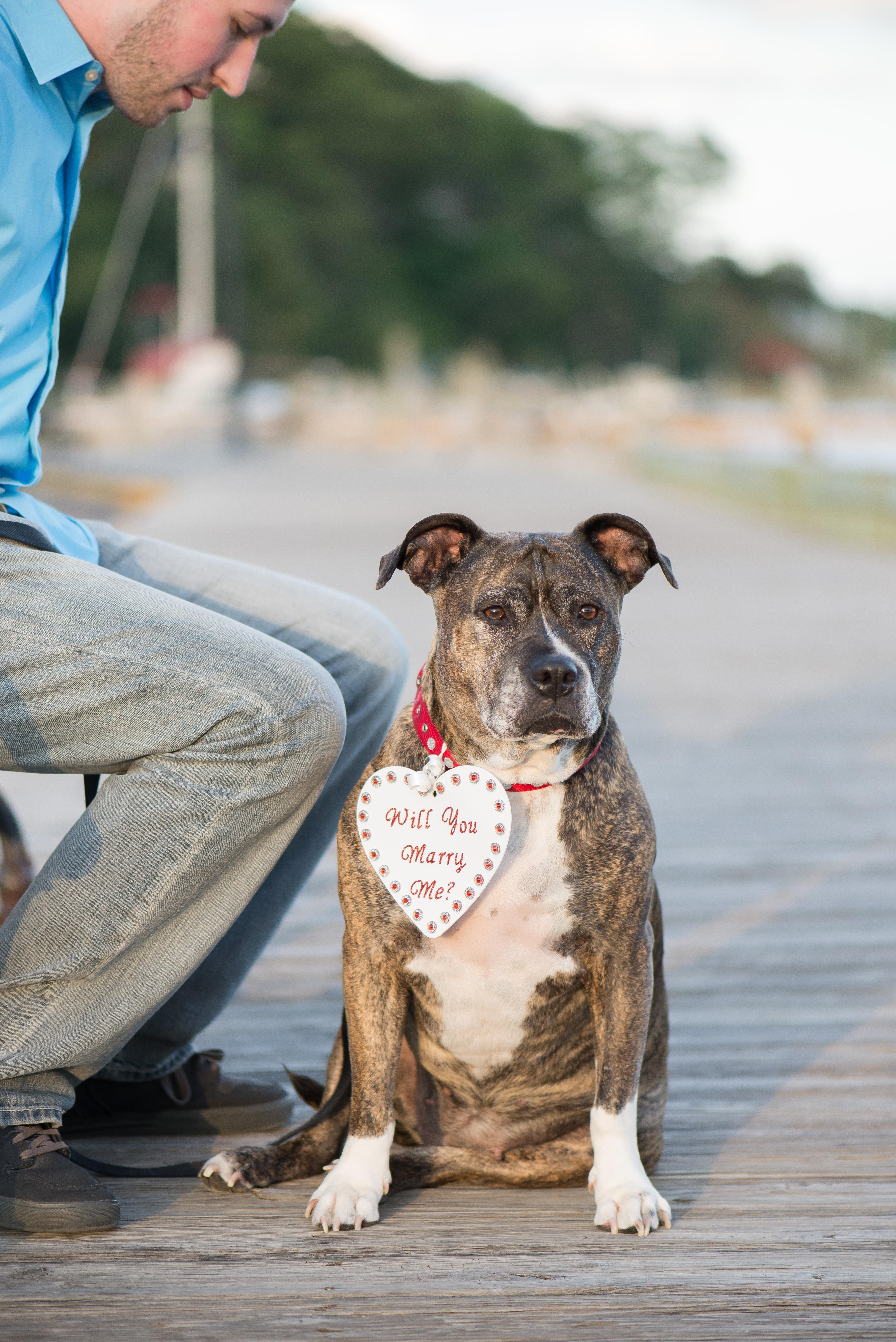 Image 4 of Dog Helps with Scavenger Hunt Proposal