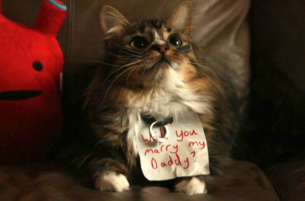 animal marriage proposals