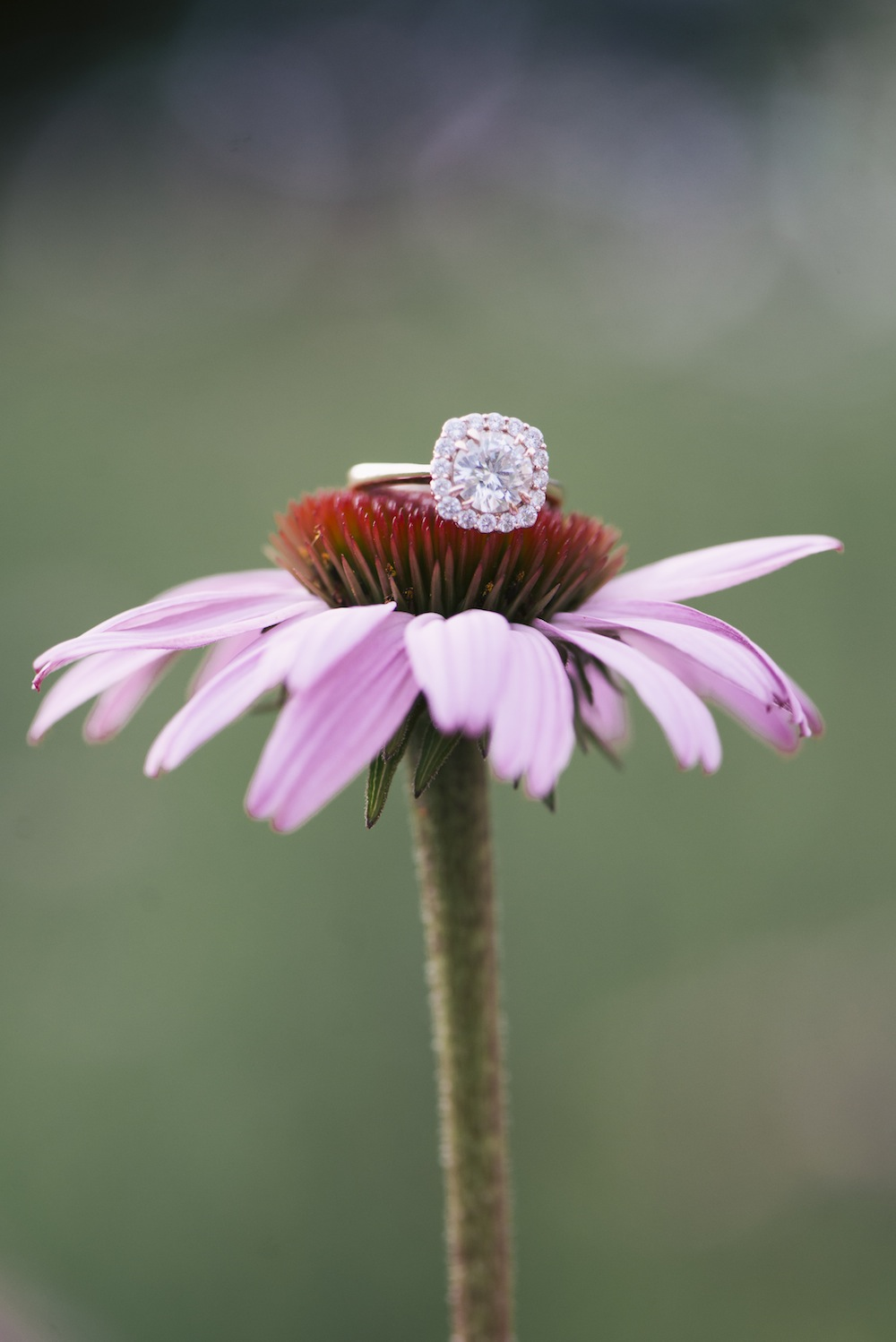 EngagementRings_WeddingRings_BrittanyBekasPhotography_BrittanyBekasPhotography7_0