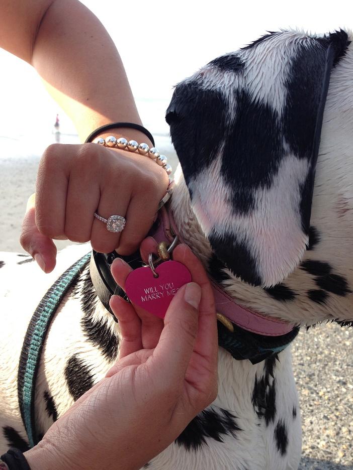 Puppy Dog Proposal (3)