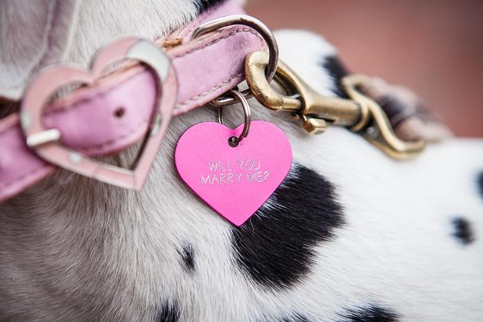 Puppy Dog Proposal (6)