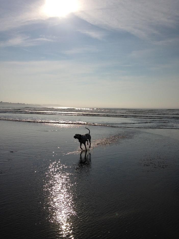 Puppy Dog Proposal (7)