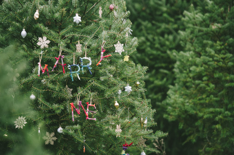 Image 3 of Adorable Marriage Proposal at a Christmas Tree Farm