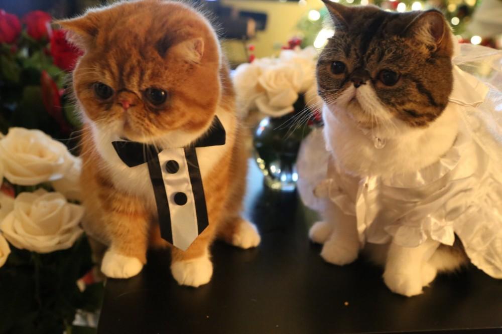 Image 4 of Kittens Help Man Propose