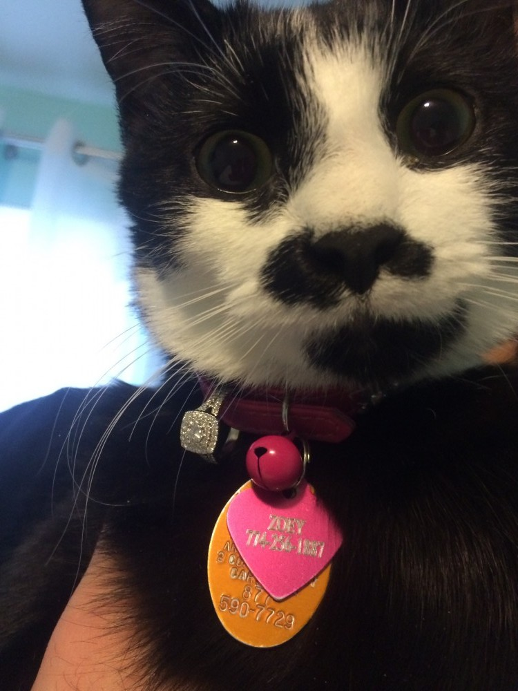 Adorable Cat Helps Man Propose on Valentine's Day