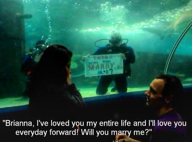 Bride and Groom's Engagement in Cleveland Aquarium