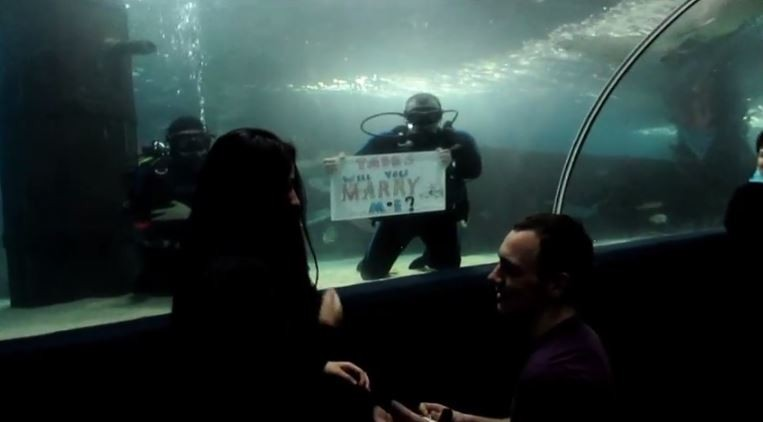 Image 2 of Brianna and Kevin's Aquarium Proposal