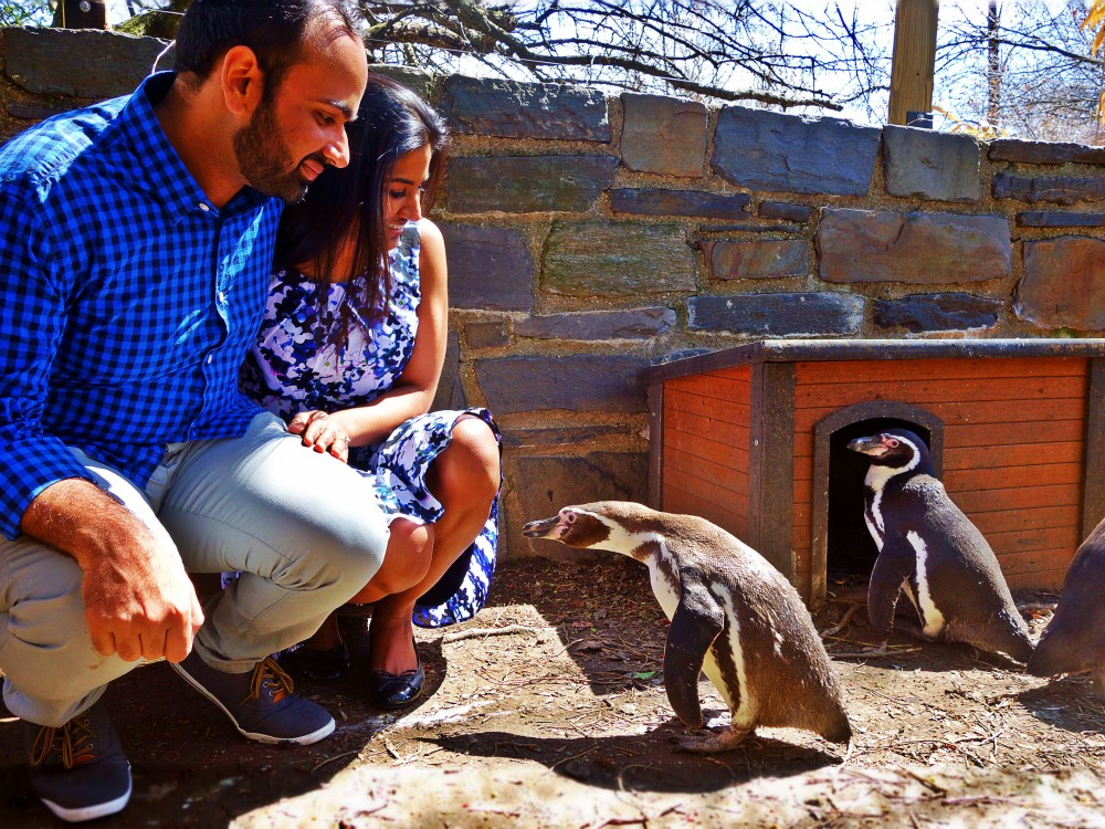 Image 1 of Jill and Vik's Proposal at the Philadelphia Zoo