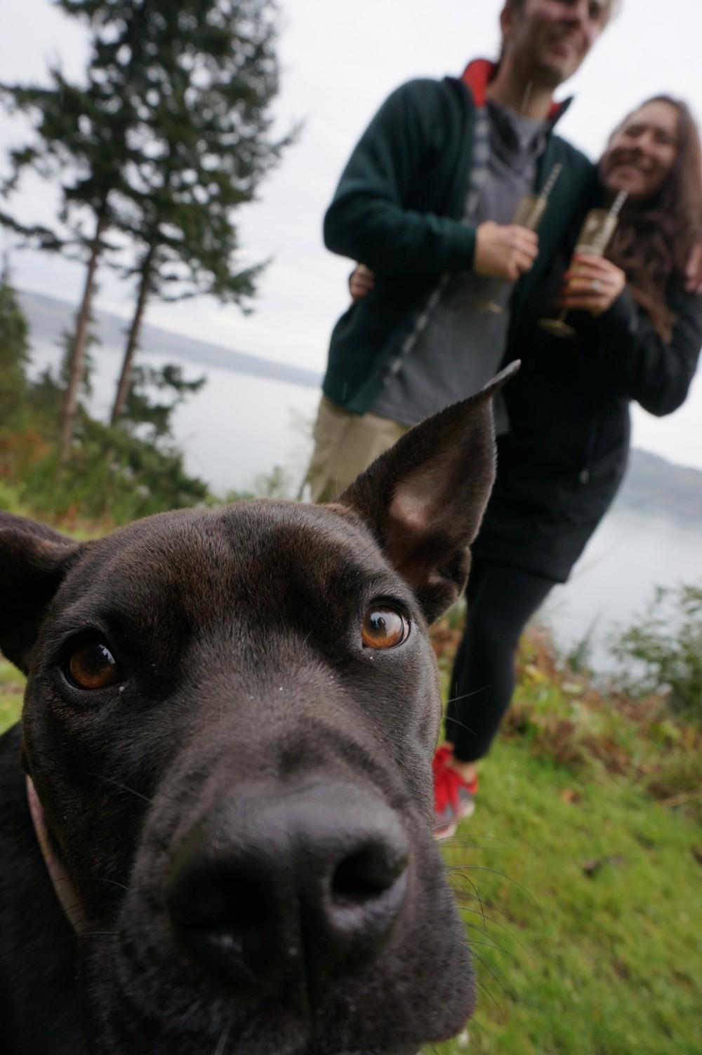 Image 2 of Lindsay and Jackson's Hiking Proposal