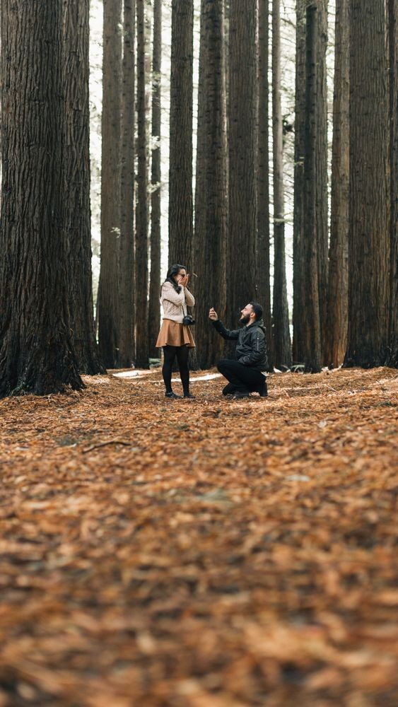 Massachusetts Marriage Proposal Ideas in Beech ForestxyY