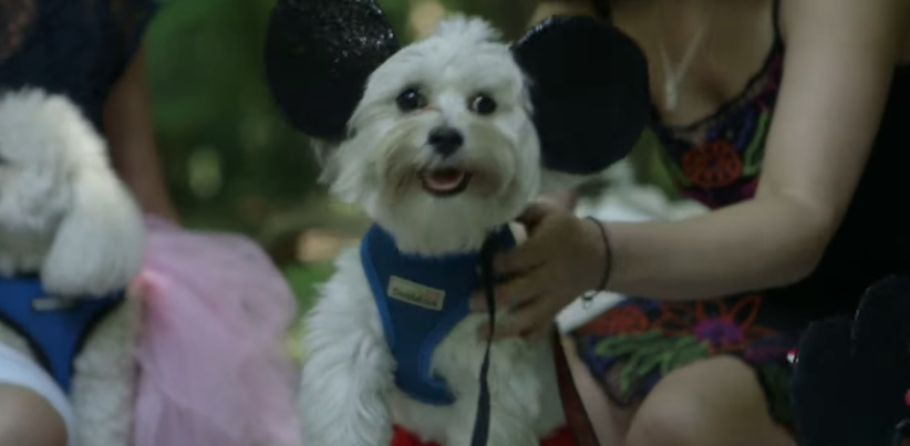Image 2 of Aarthie and Sahil's Adorable Disney Dog Proposal