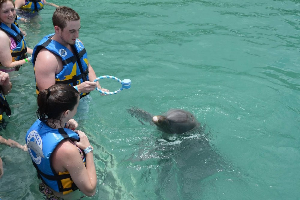 Image 14 of Raigan and Cody's Dolphin Discovery Marriage Proposal
