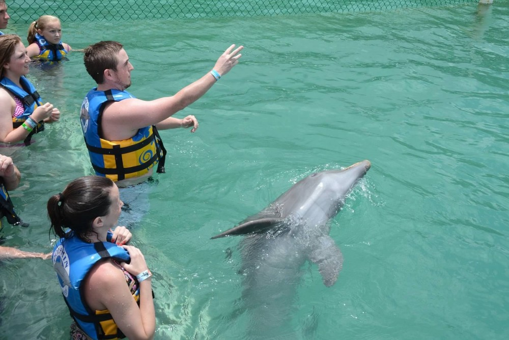 Image 2 of Raigan and Cody's Dolphin Discovery Marriage Proposal