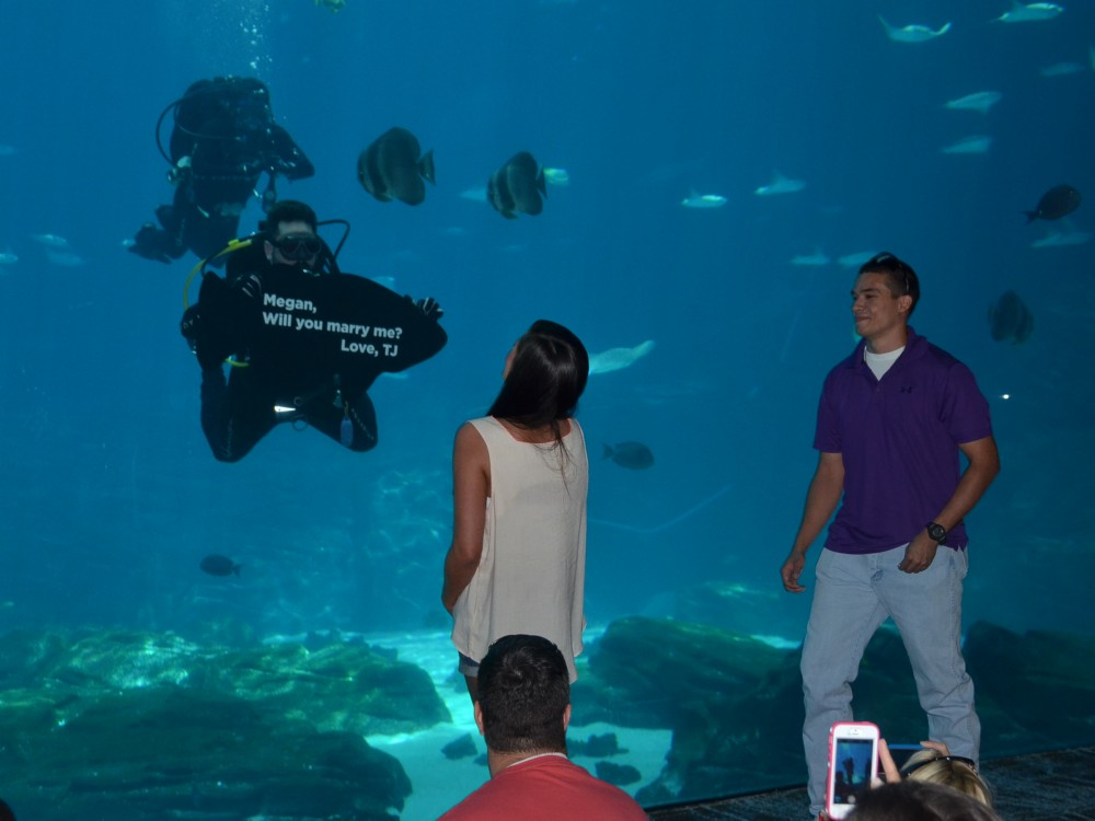 Image 2 of Megan and TJ's Georgia Aquarium Proposal