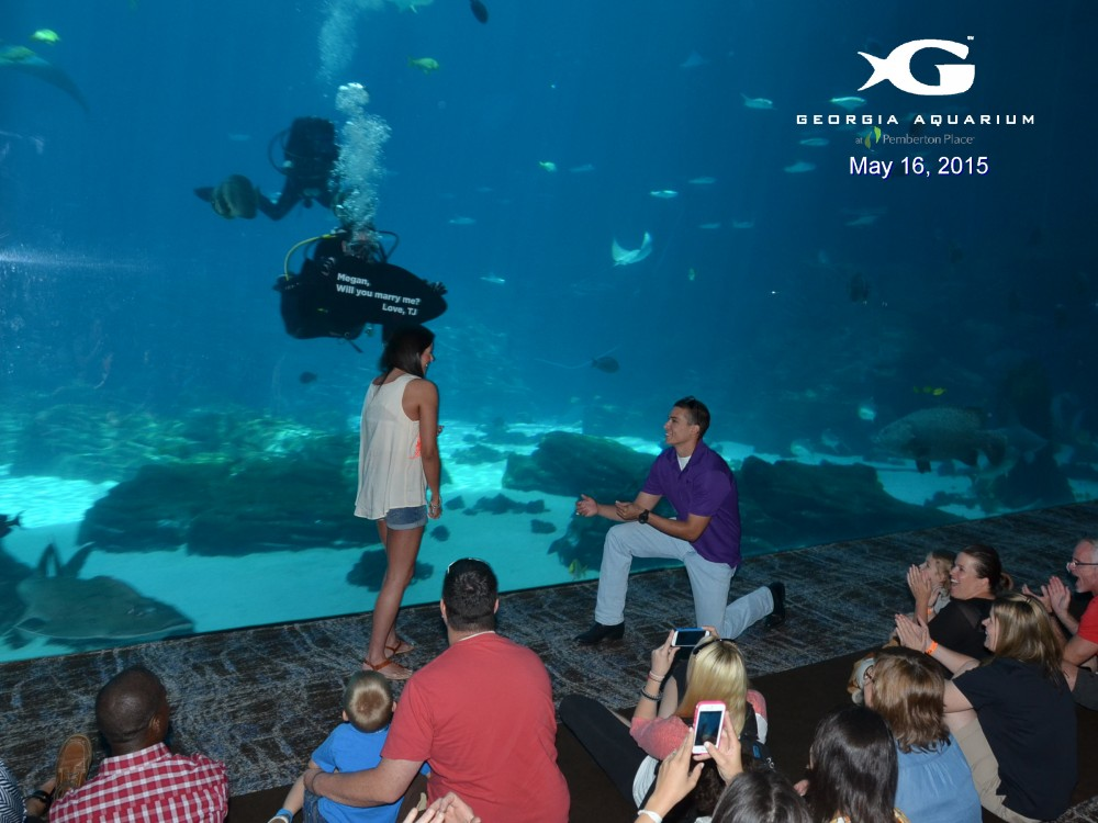 Image 3 of Megan and TJ's Georgia Aquarium Proposal