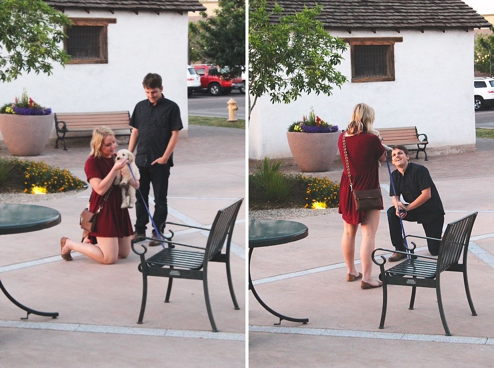 proposing-with-a-puppy