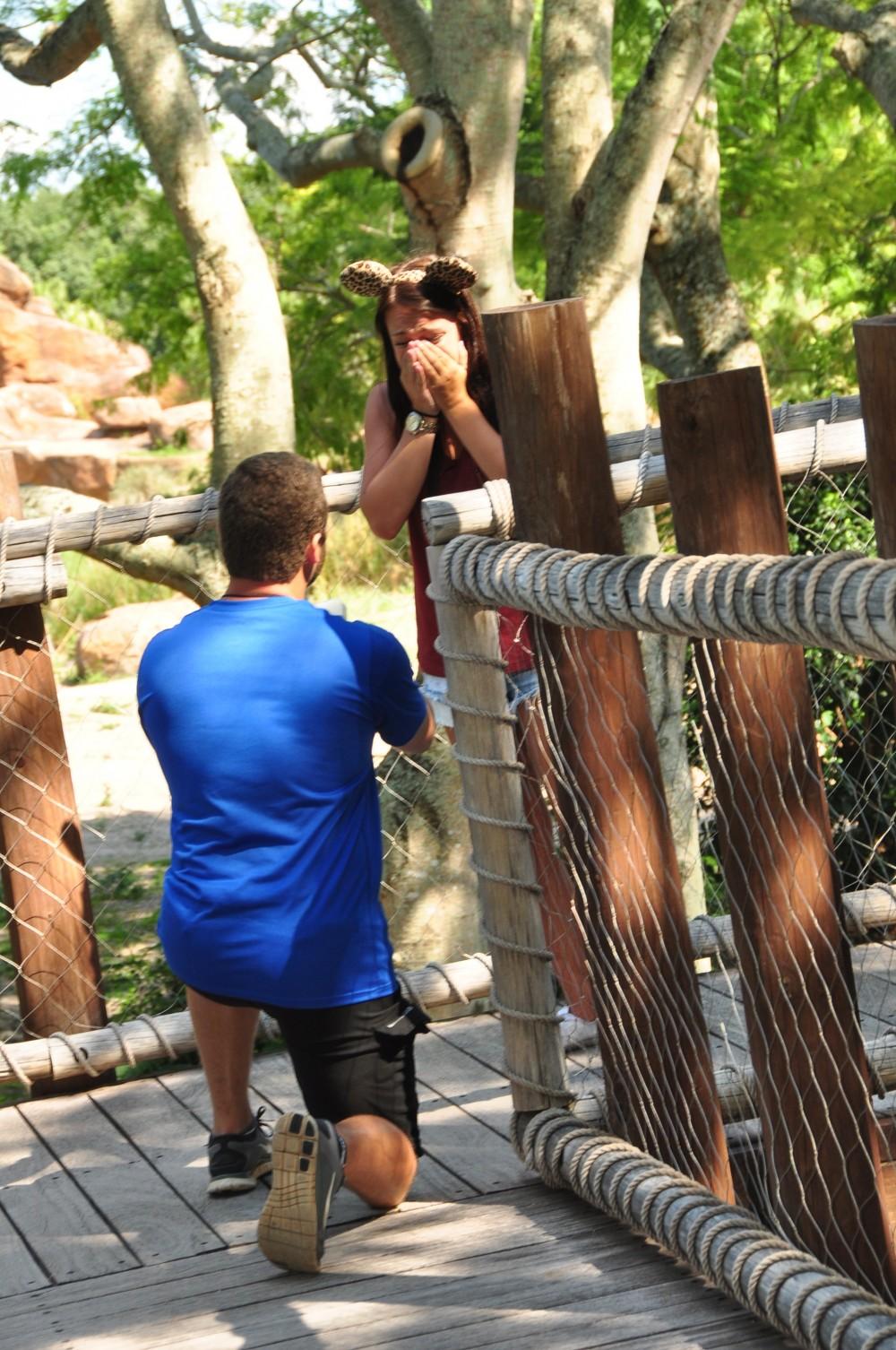 Image 1 of Tori and Blaine's Proposal at Animal Kingdom