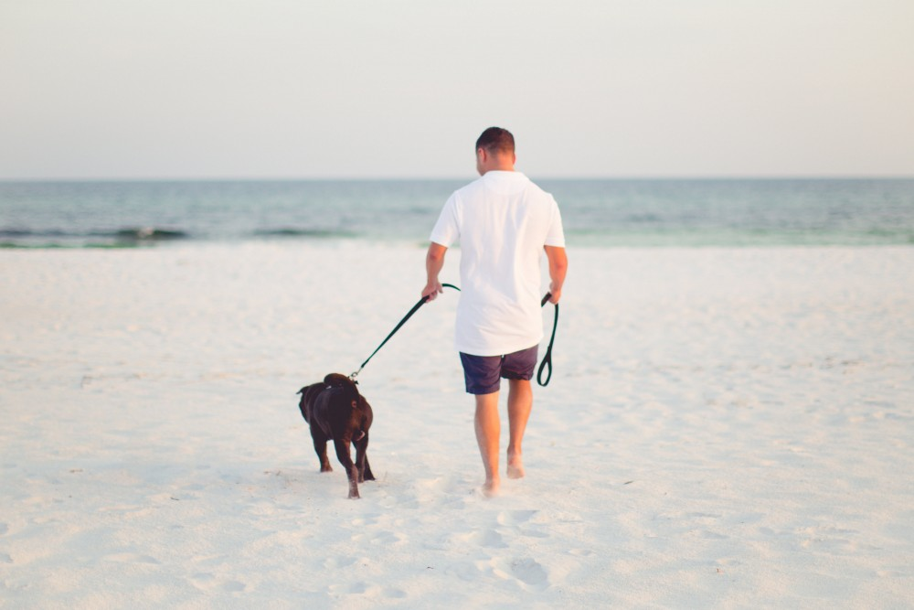 Image 2 of Emma and Rob's Pup-posal on the Beach