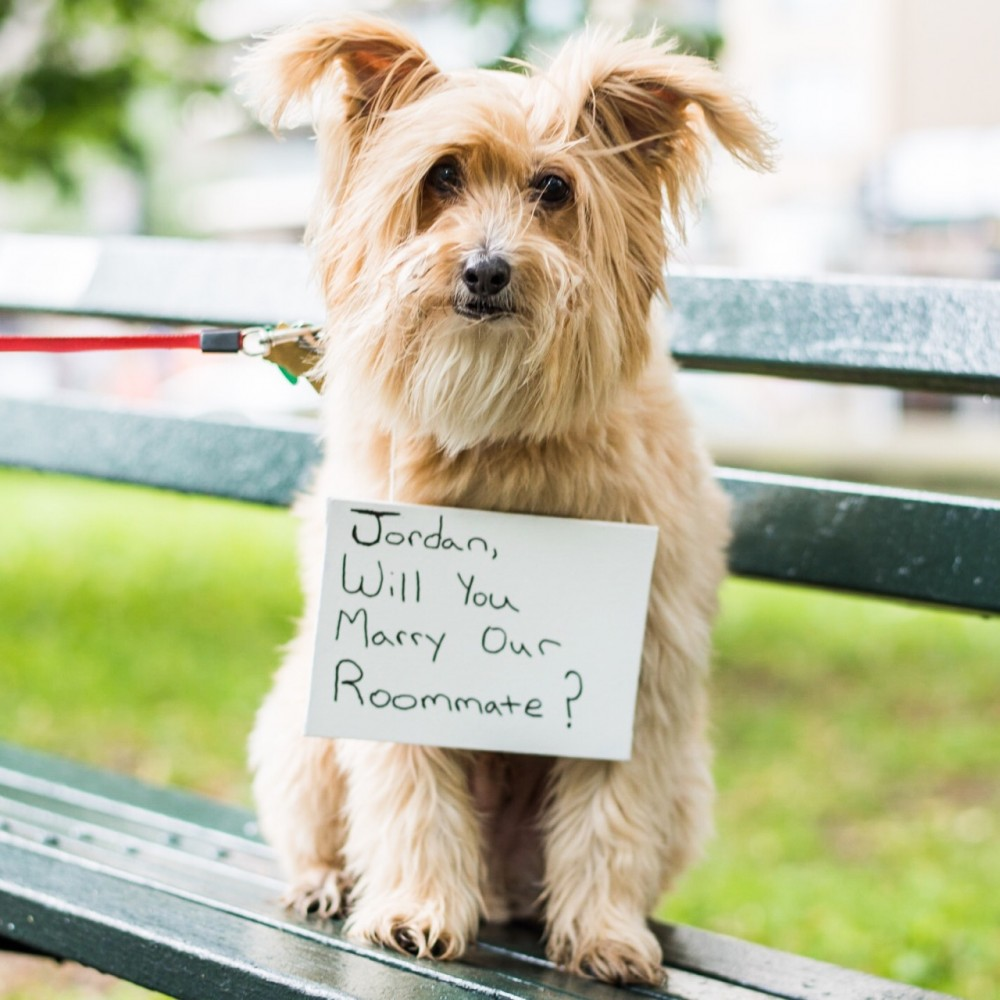 Image 1 of The Dogist Helps Couple Get Engaged: Jordan and Corey