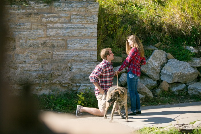 Image 4 of Mike and Christine's Puppy Proposal