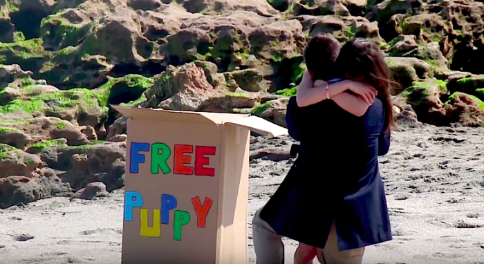 free puppy marriage proposal