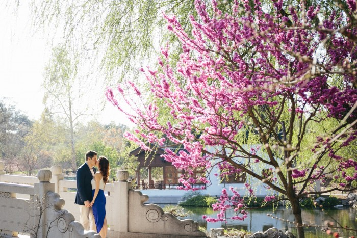 Cherry Blossom Proposal in Los Angeles (1)