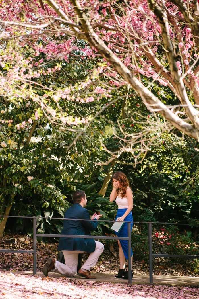 Cherry Blossom Proposal in Los Angeles (4)