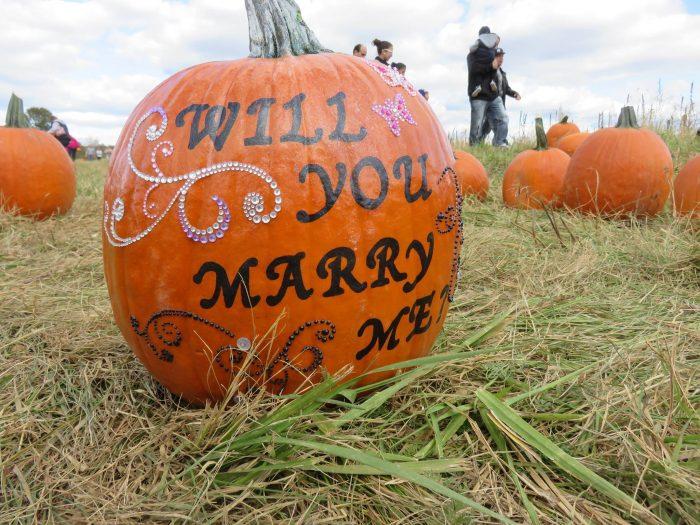 Pumpkin Patch Proposal (5)
