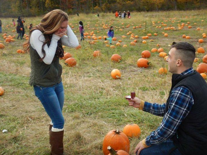 Pumpkin Patch Proposal (6)