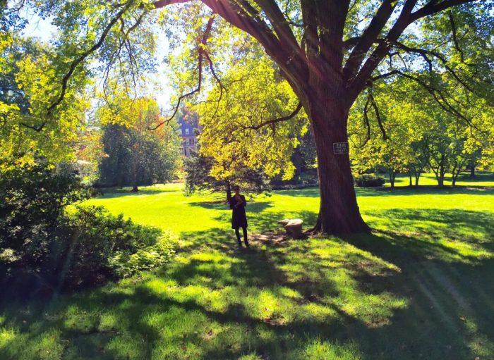 Wedding Proposal Ideas in Sherwood Gardens