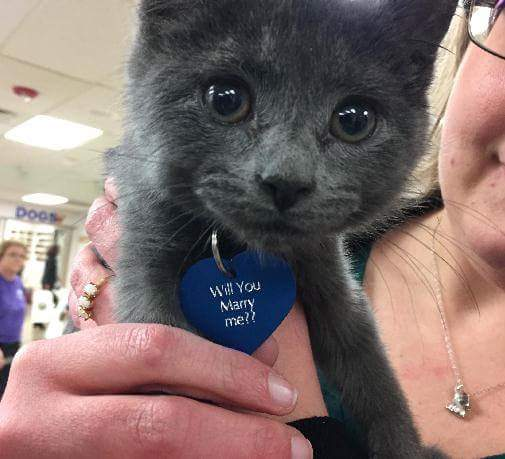 proposal-kitty