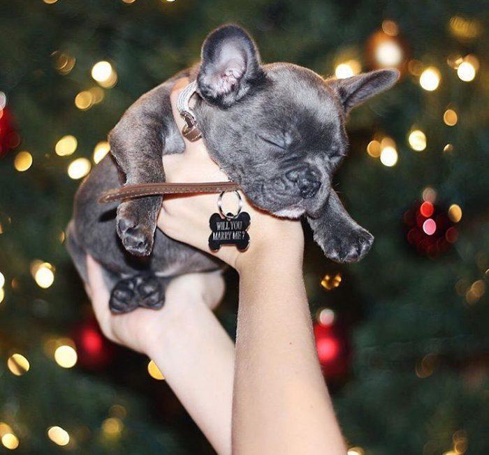 holiday-proposal-christmas