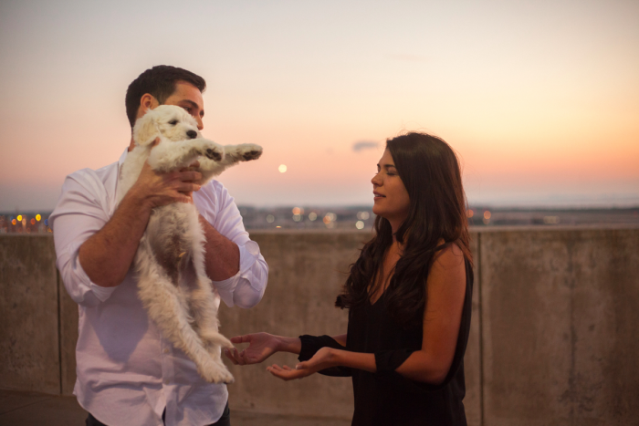 puppy-proposal-video-103