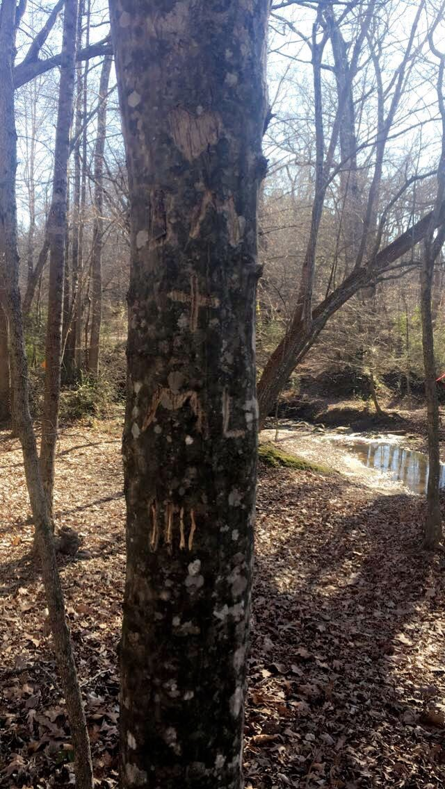 Where to Propose in South Rowan YMCA Nature Trail