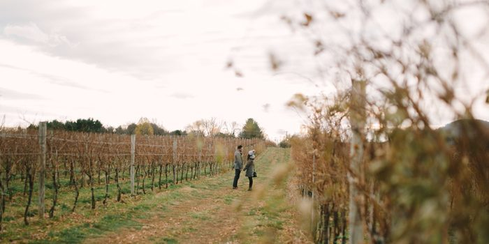 Wedding Proposal Ideas in Big Cork Vineyards, Rohrersville, MD