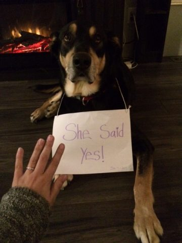 Marriage Proposal Ideas in In our backyard forest, In Huntsville Ontario