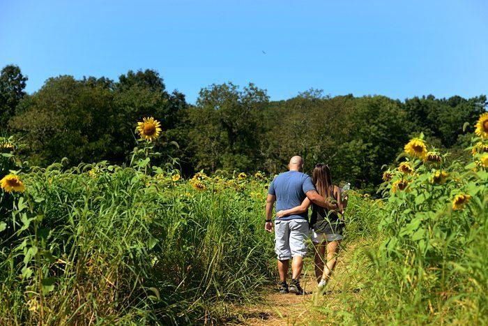 Bride's Proposal in Sunflower field, New Jersey