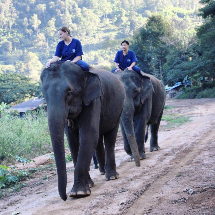 Engagement Proposal Ideas in Thai Elephant Home in Chiangmai Mai, Thailand