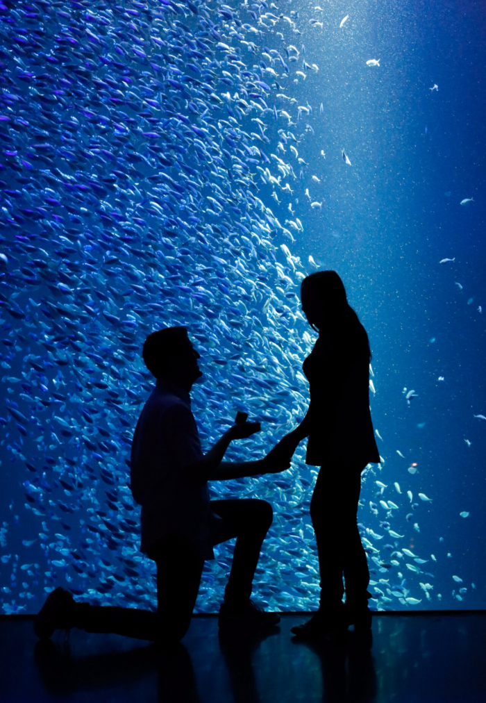 Lauren and Kyle's Engagement in Wonders of Wildlife Museum & Aquarium - Springfield, Missouri