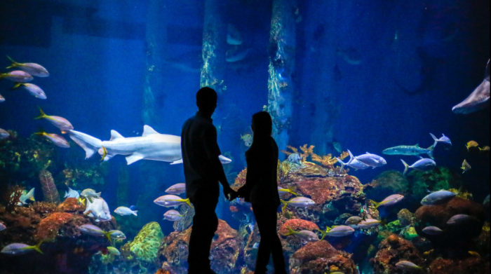 Lauren's Proposal in Wonders of Wildlife Museum & Aquarium - Springfield, Missouri