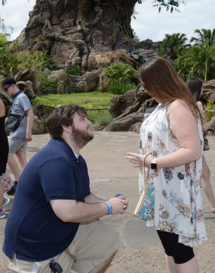 Engagement Proposal Ideas in Disneys Animal Kingdom
