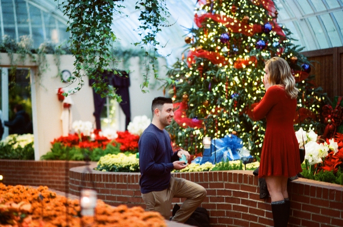 Engagement Proposal Ideas in Phipps Conservatory